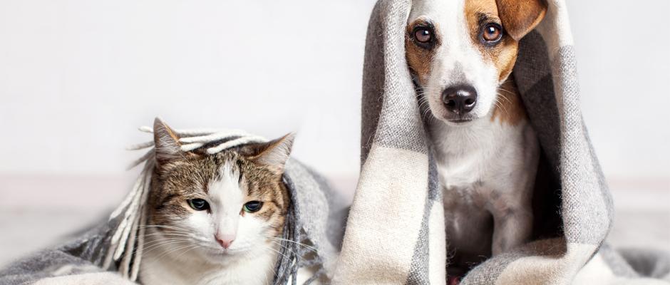 ¿Vas a cremar a tu gato o perro? Lo que debes saber antes de elegir