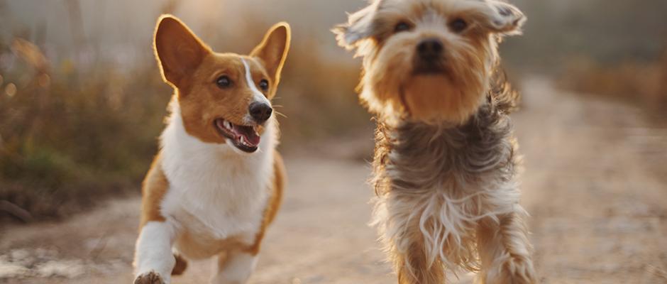 Perros terapéuticos para superar el duelo