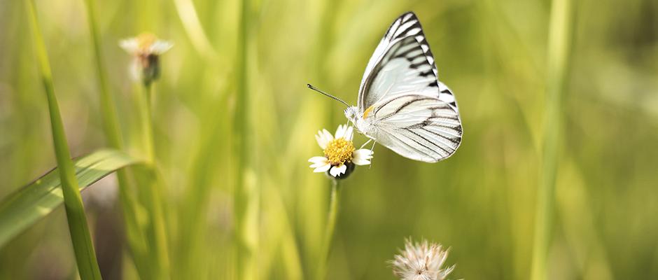 El significado de la mariposa
