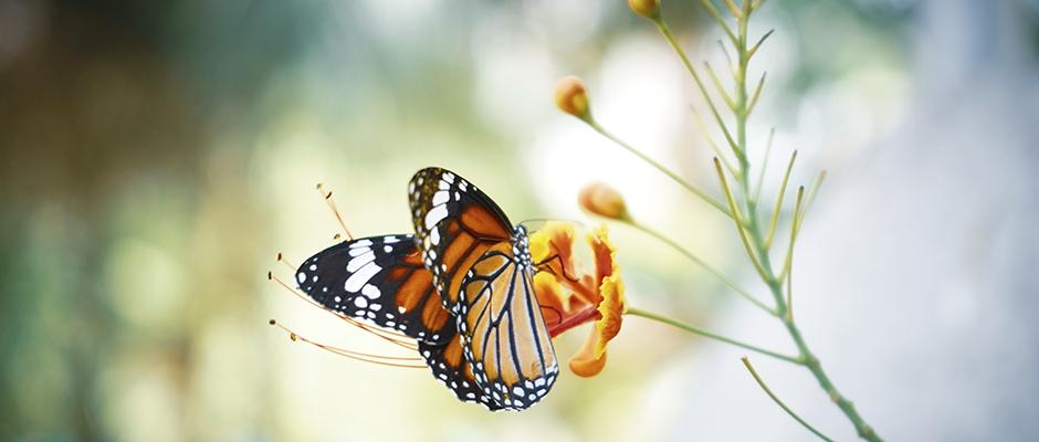 El significado de la mariposa en la tanatología